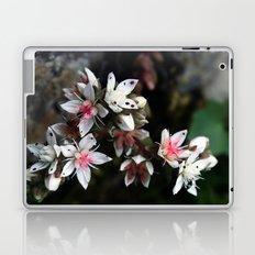 White stonecrop - Sedum Laptop & iPad Skin