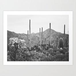 A Gathering of Cacti, No. 2 Art Print