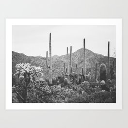 A Gathering of Cacti, No. 2 Art Print