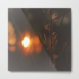 Twilight Wattle Metal Print