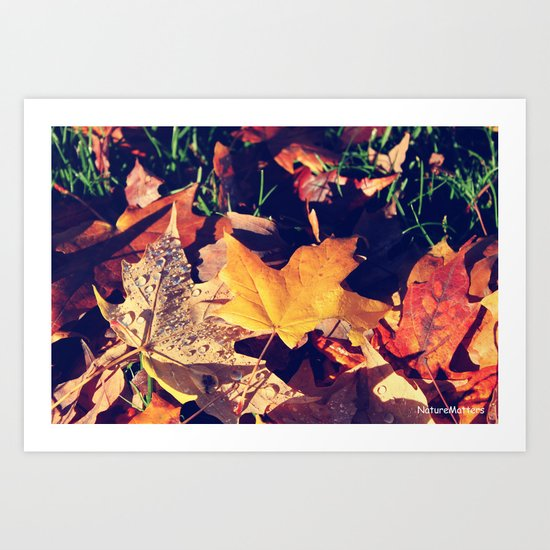 fall yellow, brown leaves falling on green grasses. Art Print