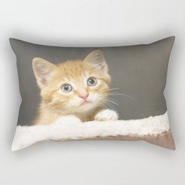 Ginger kitten playing in a box Rectangular Pillow