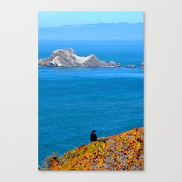 raven at devil's slide Canvas Print