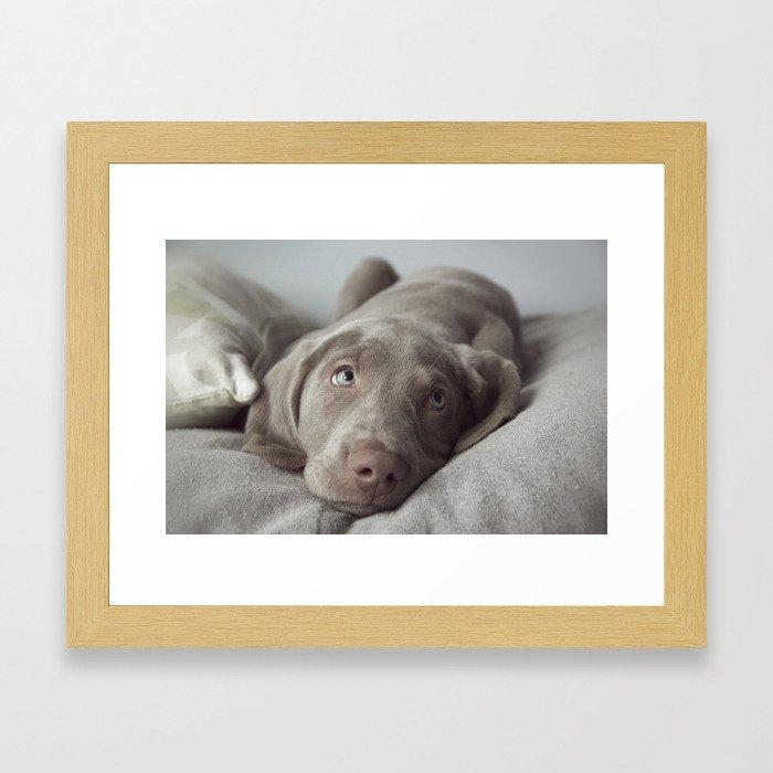 Weimaraner Puppy Love Framed Art Print