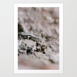 Lizards in the Mallee (1 of 2) Art Print