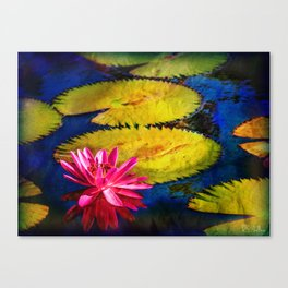 Water Lily 2 Canvas Print