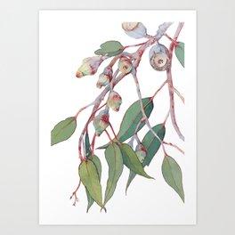 Australian eucalyptus tree branch Art Print