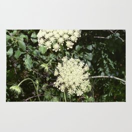 Queen Anne's Lace II Rug