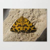 moth Canvas Prints featuring moth by giol's