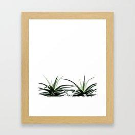Succulents - Haworthia attenuata - Plant Lover - Botanic Specimens delivering a fresh perspective Framed Art Print