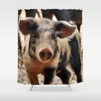 piglet Shower Curtains featuring Young Piglet by MehrFarbeimLeben