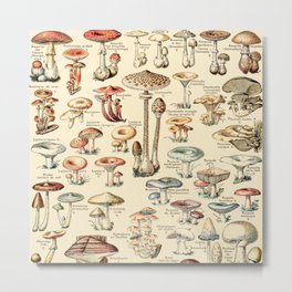 Trippy Vintage Mushroom Chart // Champignons by Adolphe Millot XL 19th Century Science Artwork Metal Print