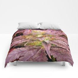 Passionately Purple Comforters