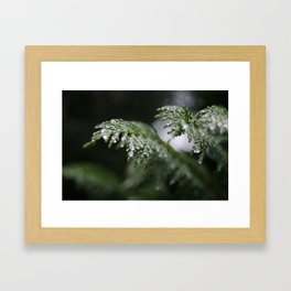 Icy Branches Framed Art Print
