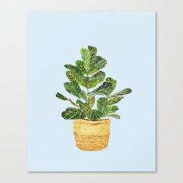 Fiddle Leaf Fig in a Basket- Ficus Lyrata Canvas Print