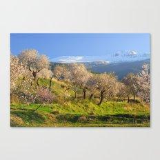 Flowering Almond. San Juan Canvas Print