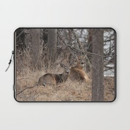 White-Tailed Deer Laptop Sleeve