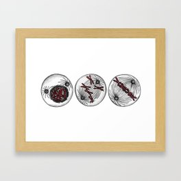 Mitotic cells Framed Art Print