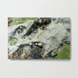 The Seashore Collective Metal Print