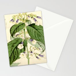 Curtis's Botanical Magazine, Plate 4315. 1847 Stationery Cards