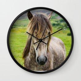 Beautiful, grey Icelandic horse portrait at meadow. Wall Clock