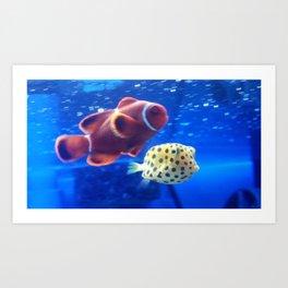 Clownfish & Boxfish Art Print