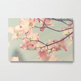 Pink Dogwood 1: Seen from below Metal Print