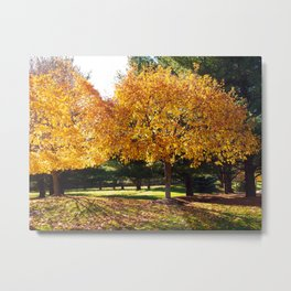 Fall Trees in Sun Light Metal Print