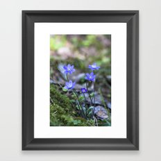 Anemone in forest Framed Art Print