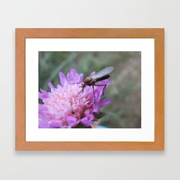 Just a fly Framed Art Print