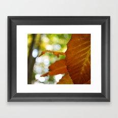 Tangerine Framed Art Print