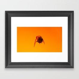 Bugged #07 Framed Art Print