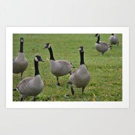 Pack O' Geese Art Print