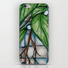 Doberman Vine iPhone Skin