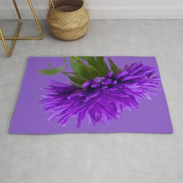 Close-up image of the flower Aster on purple background. Shallow depth of field. Rug