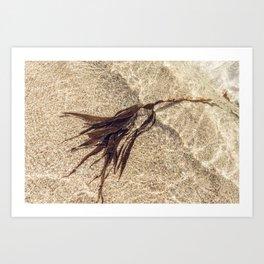 Shoreline Seaweed. Art Print