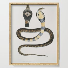 Banded Cobra Capella (Naia tripudians) from Illustrations of Indian zoology (1830-1834) by (1800-187 Serving Tray