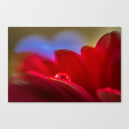 Simply Put water droplet on a Gerber Daisy Canvas Print