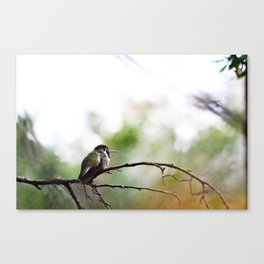 Nature at its finest  Canvas Print