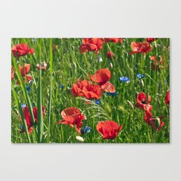 Red Poppy Meadow Canvas Print