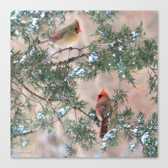 Winter Pair Cardinals (sq) Canvas Print