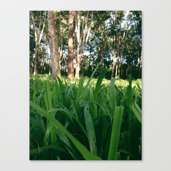 Bed of Grass Canvas Print