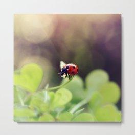 Ladybird, ladybird, fly away home.. Metal Print