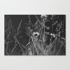 roadside wildflowers Canvas Print