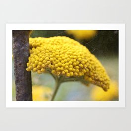 Vintage Yellow Yarrow Art Print
