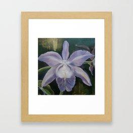 Orchid. Framed Art Print