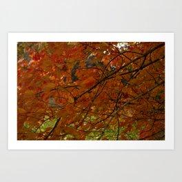 Red Maple 2017 Art Print