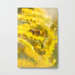 Bee sitting on Solidago virgaurea Metal Print