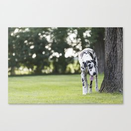 Harlequin Great Dane Next to Old Oak Tree Canvas Print
