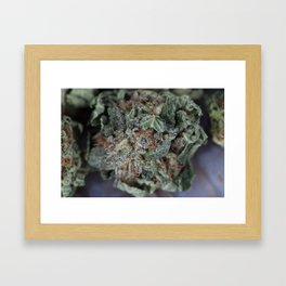 Master Kush Medical Marijuana Framed Art Print